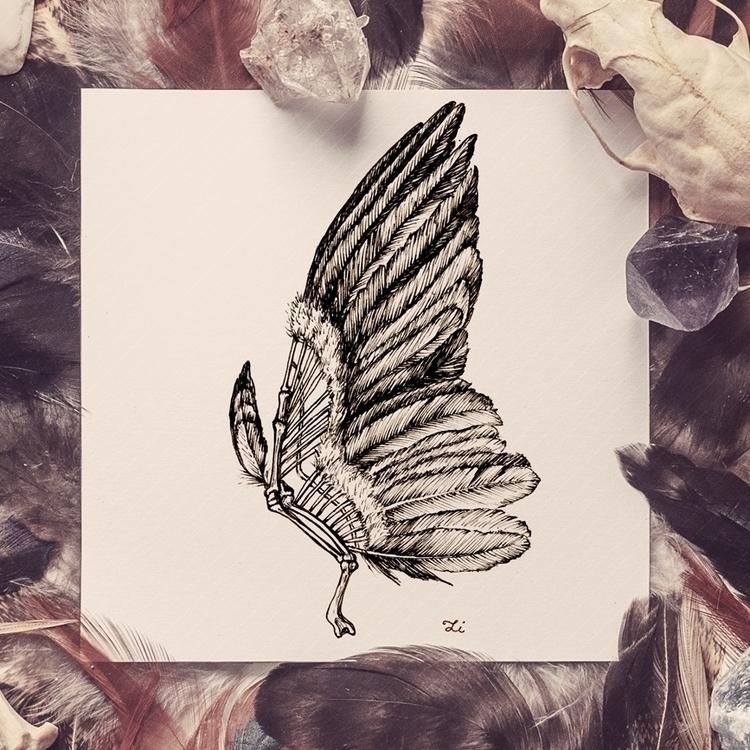 wing - wings, bird, sketch, drawing - zizilka   ello