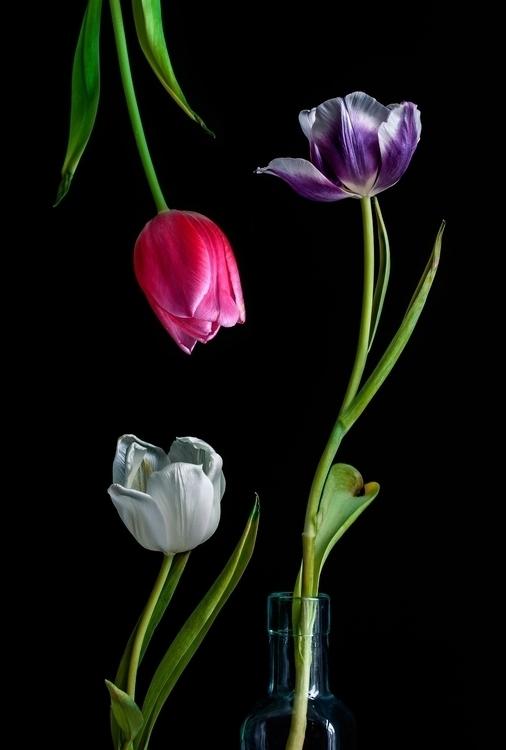 Stilleven met tulpen - photography - vanmas | ello