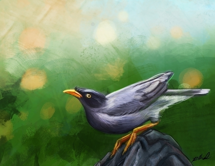 Myna - myna, birds, bird, tropicalbirds - rkamalart | ello