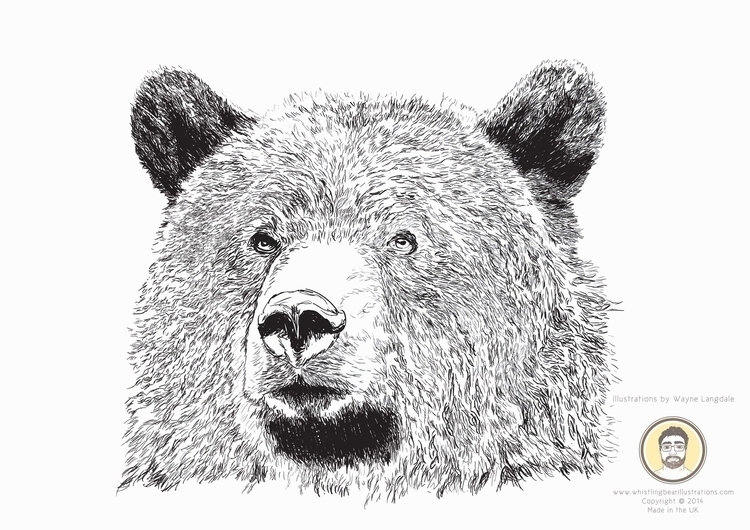 Bear portrait Adobe Illustrator - whistlingbear | ello
