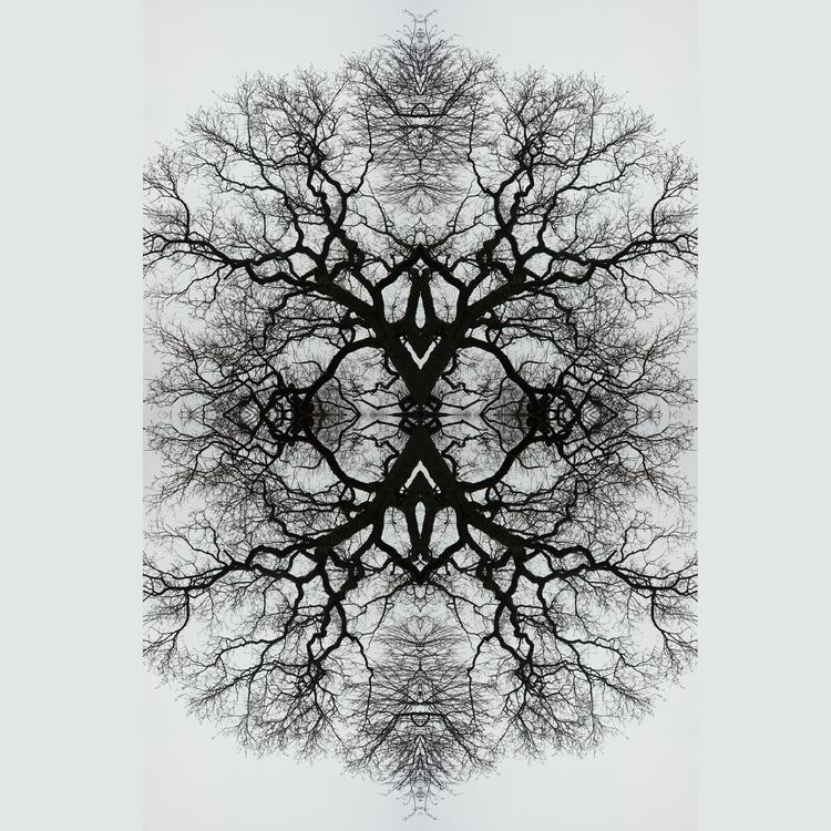 Treeface - trees, multipleexposure - bencain | ello