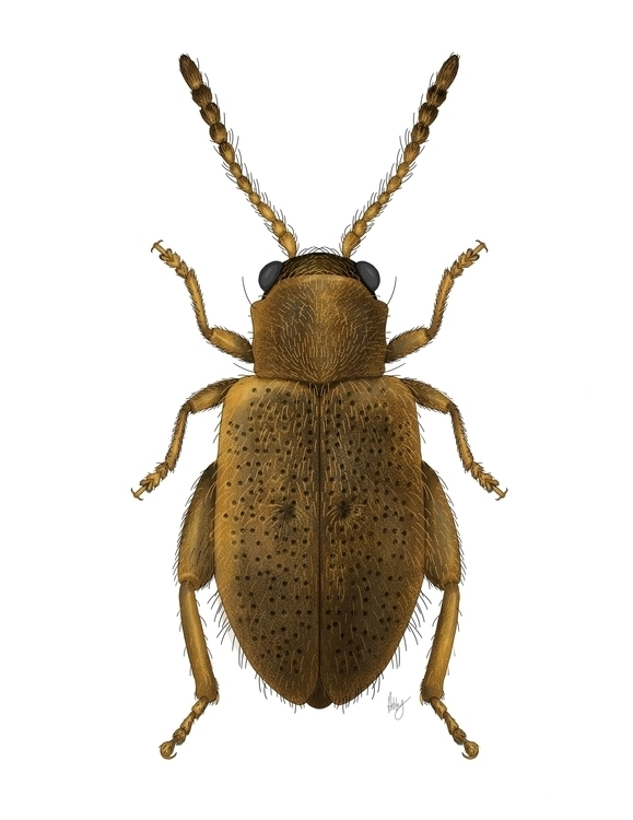 Entomology illustration created - abby_williams | ello
