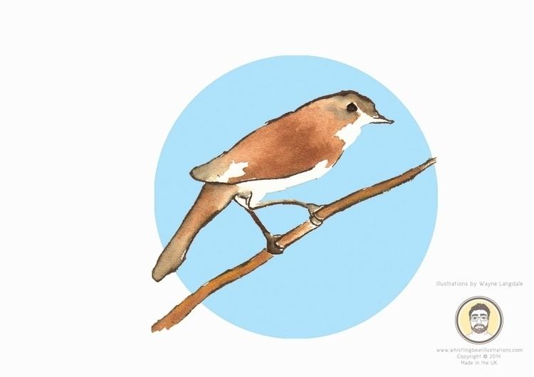 Nightingale Birds project creat - whistlingbear | ello