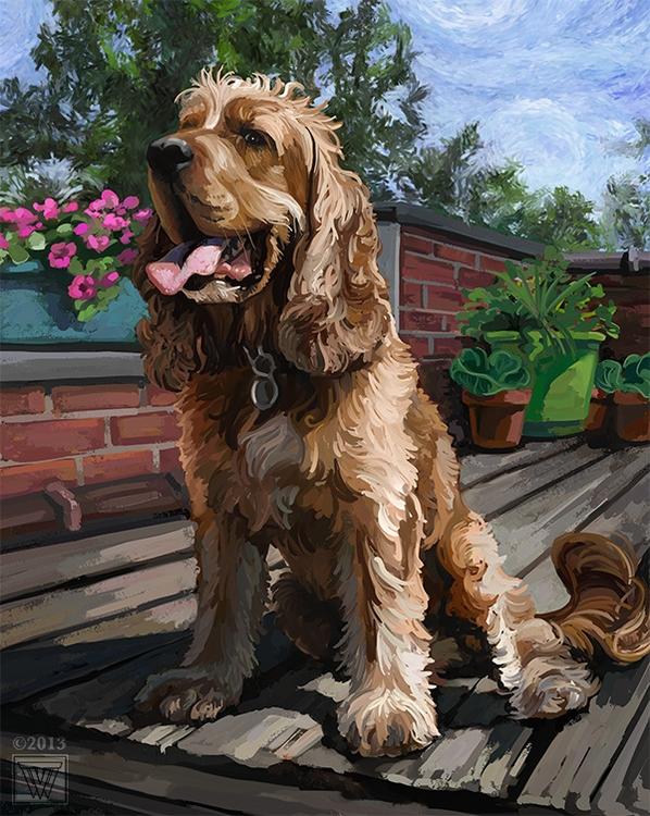 Cocker Spaniel portrait Traci V - tracivw | ello