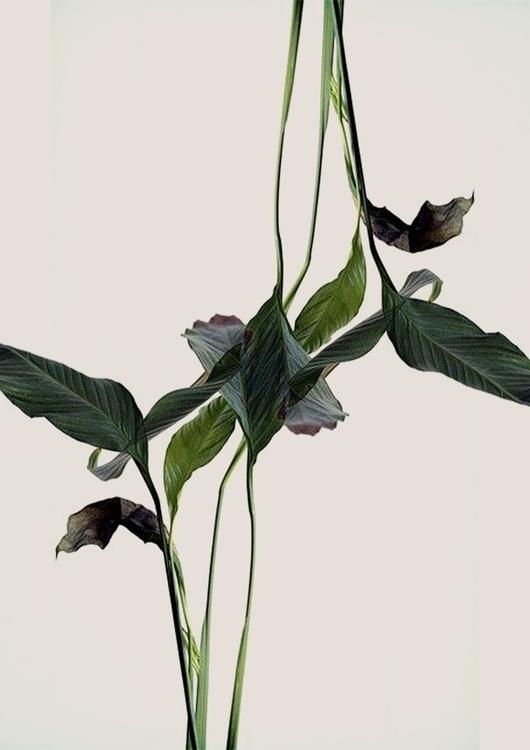 plants, illustration, beatrizalao - beatrizalao | ello