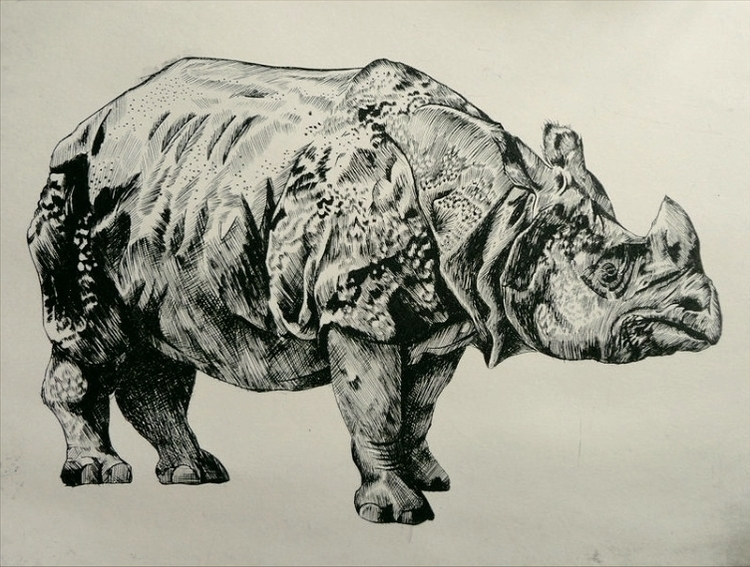 Rhino - steel engraving - illustration - mleczu | ello