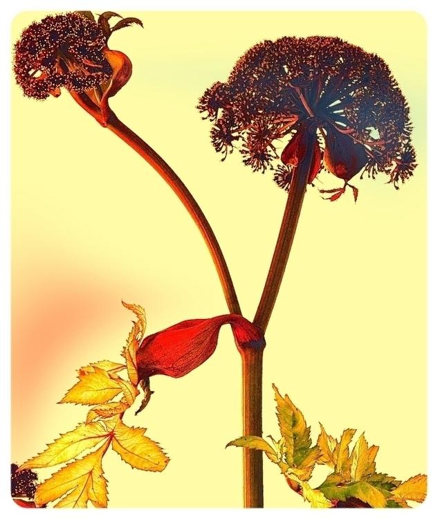 … 1/25 - NikonD80, surrealism, flowerphotograpy - heinvanwersch | ello