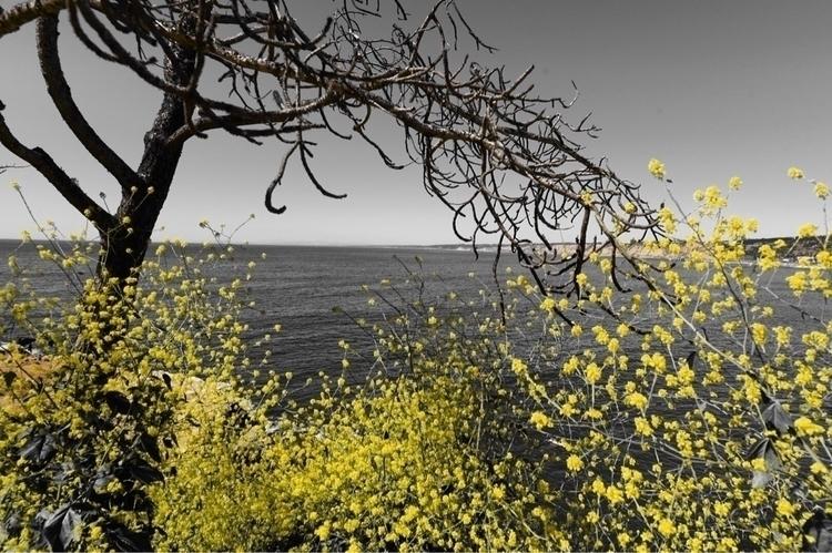 dslr, photography, selectivecolor - d_nodave | ello