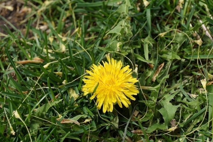 Photos DSLR camera. Springtime - tobecooked | ello