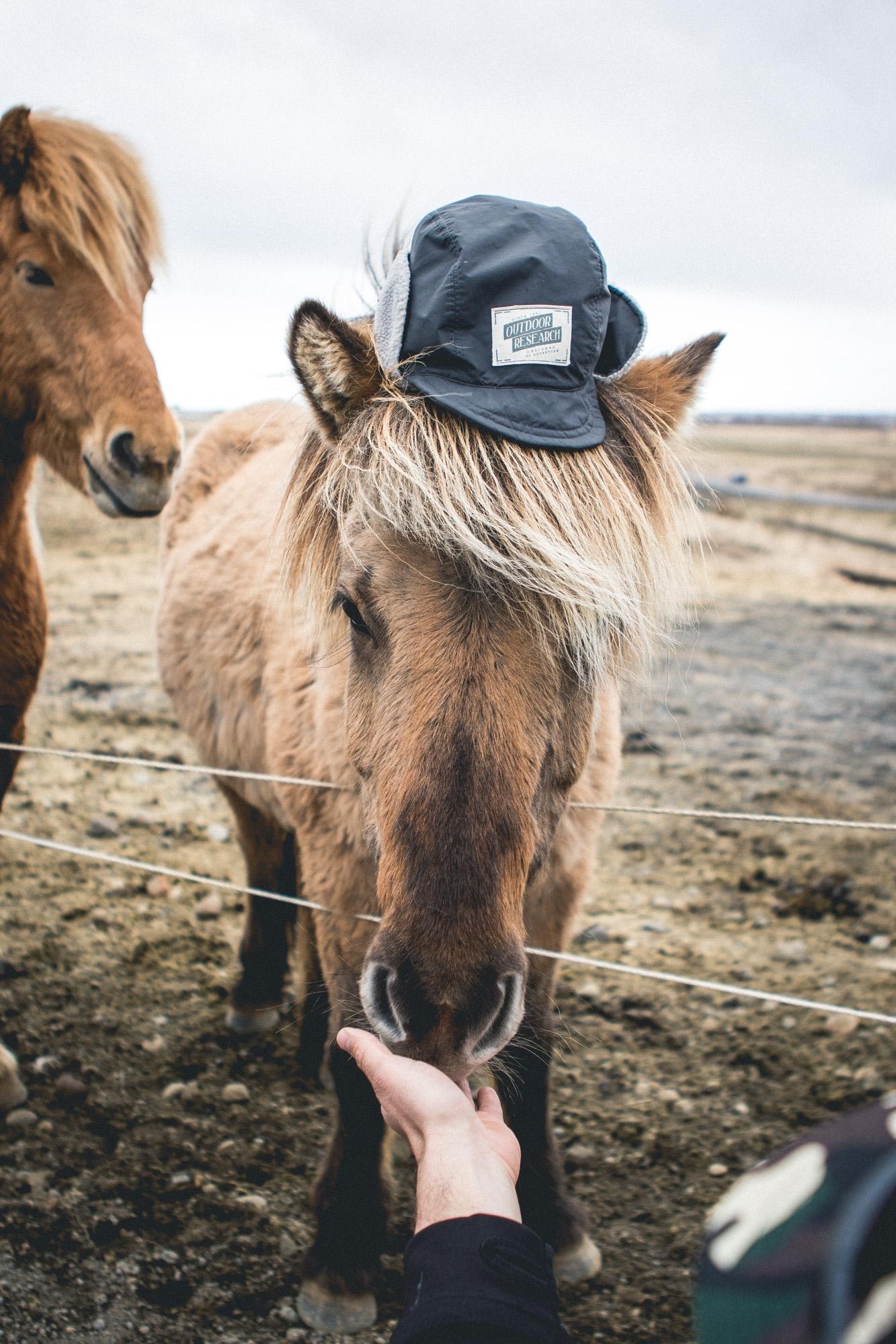 Icelandic spirit animal - thomaswoodson | ello