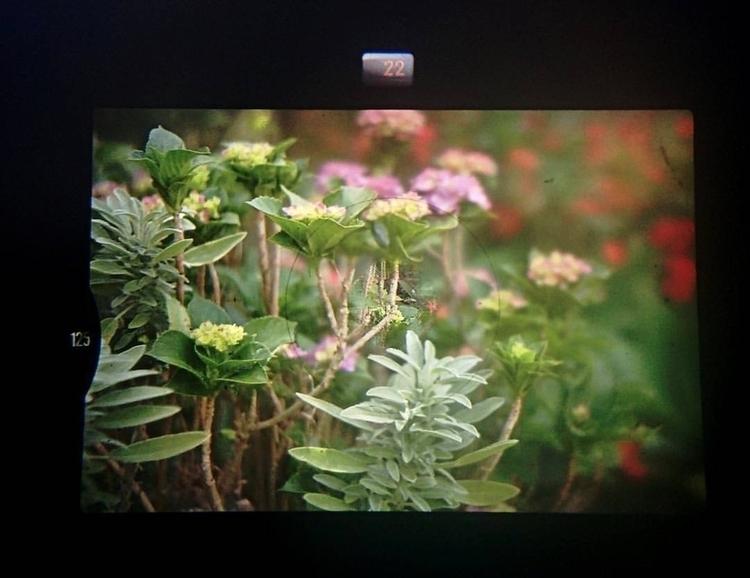 Nikon FM2 AF NIKKOR 50mm lens - photography - massanori | ello