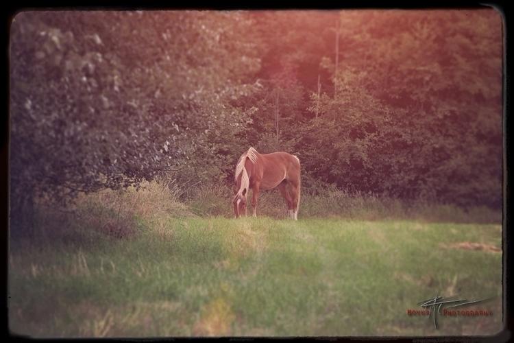 landscape, landscapephotography - nomadikcreative   ello