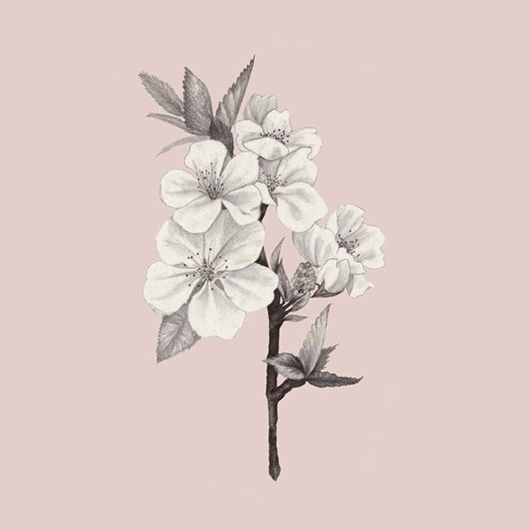illustration, graphite, flower - 1eligarcia | ello