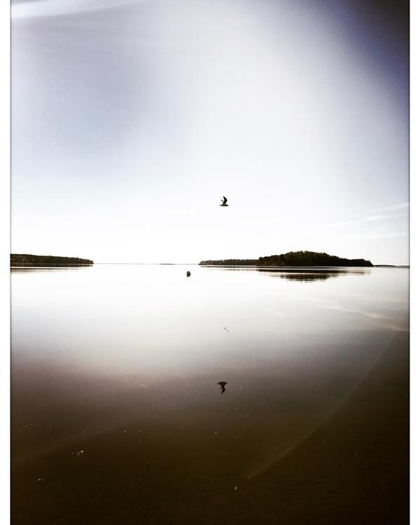 Hanging sky diving - sea, seagull - yogiwod | ello