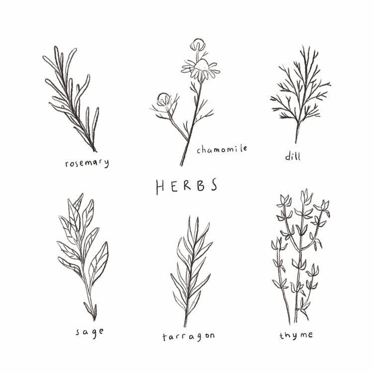 Herb 101 - illustration, handdrawn - joseephines | ello
