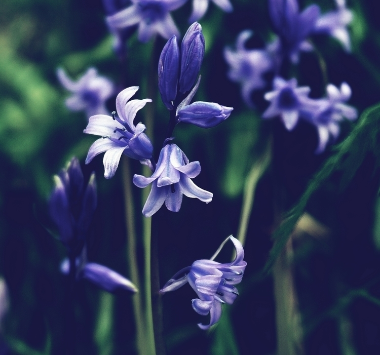 jewels blue lighting pathway li - suzyhazelwood | ello
