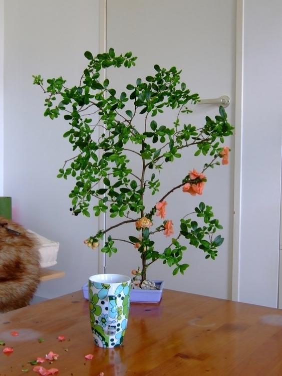 ikebana - bloemen | ello