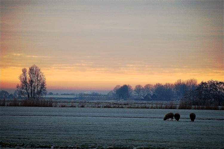 Sheep - NikonD50, naturephotographie - heinvanwersch | ello