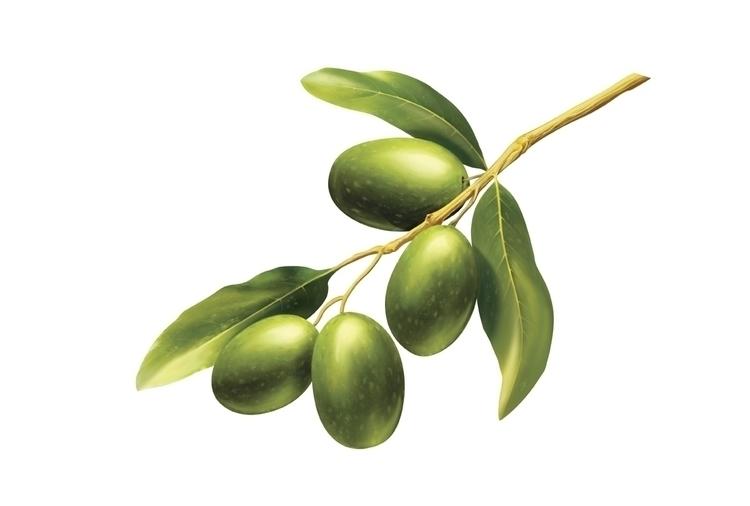 Bertolli Olive - bertolli, olive - stevevdh | ello