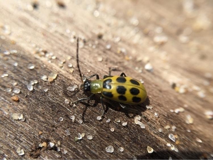 Beetle sandy driftwood - macro, iPhone - pictorific | ello