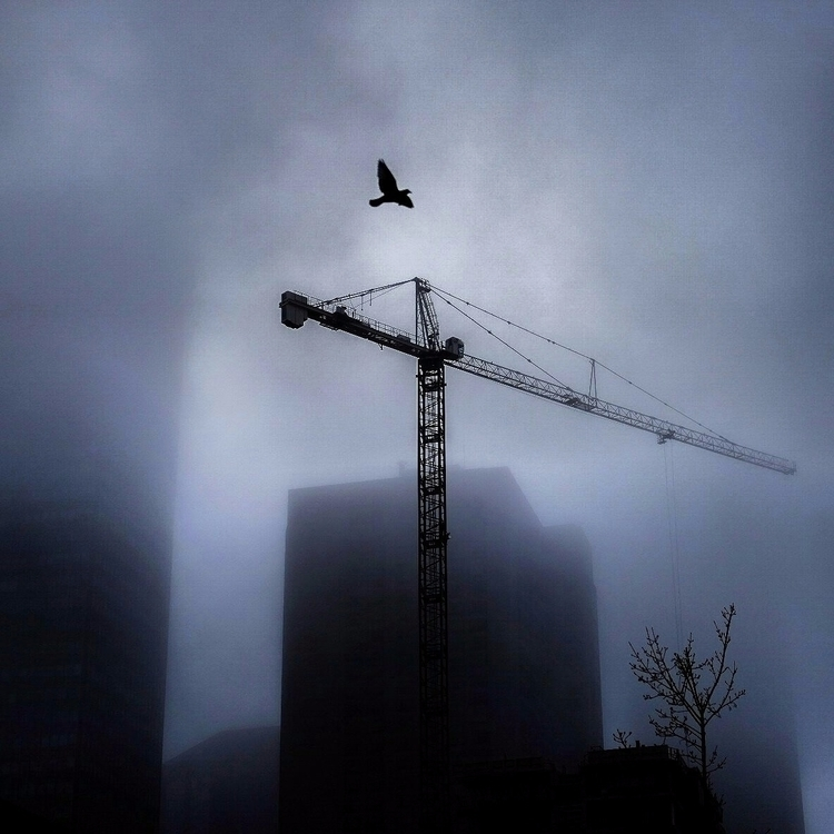 crane bird - street#streetphotography - maximemartin | ello
