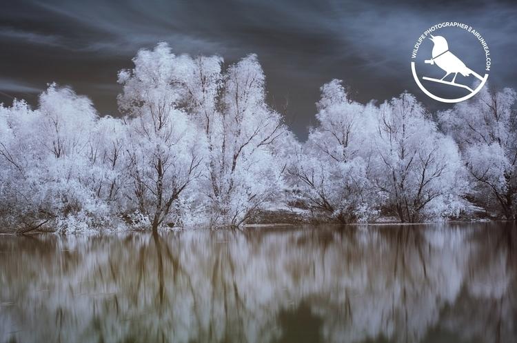 Infrared nature // 20170506 - infrared - airunreal   ello