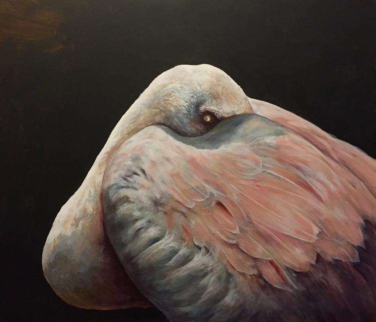 Resting Lesser Flamingo - wadingbirds - scottwenner | ello