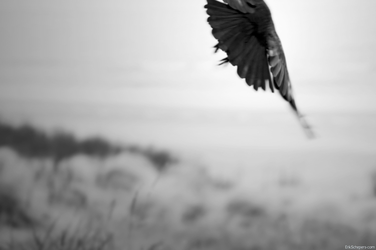De vogel gevlogen. bird flown,  - erik_schepers | ello