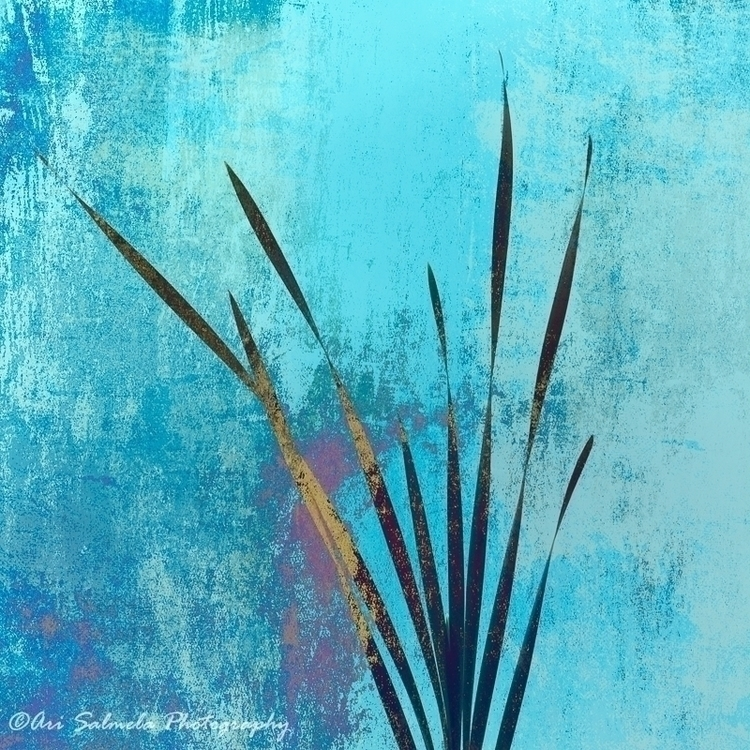 Summer Short III - Leaf blades  - arisalmelaphoto | ello