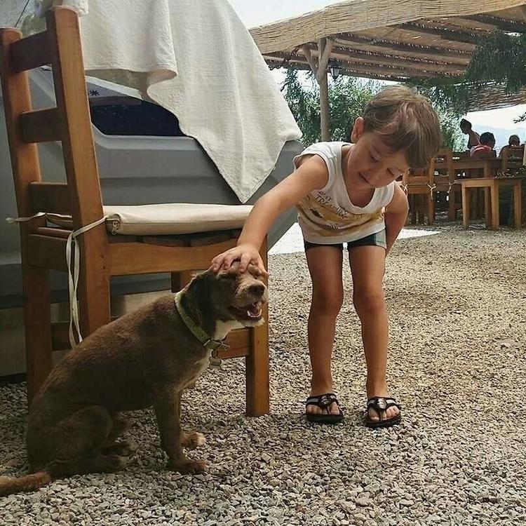 seldom lovely boy - bodrum, dog - aleksaleksa | ello