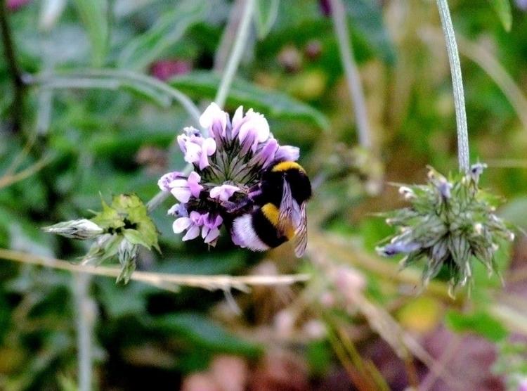 Bee - euric | ello