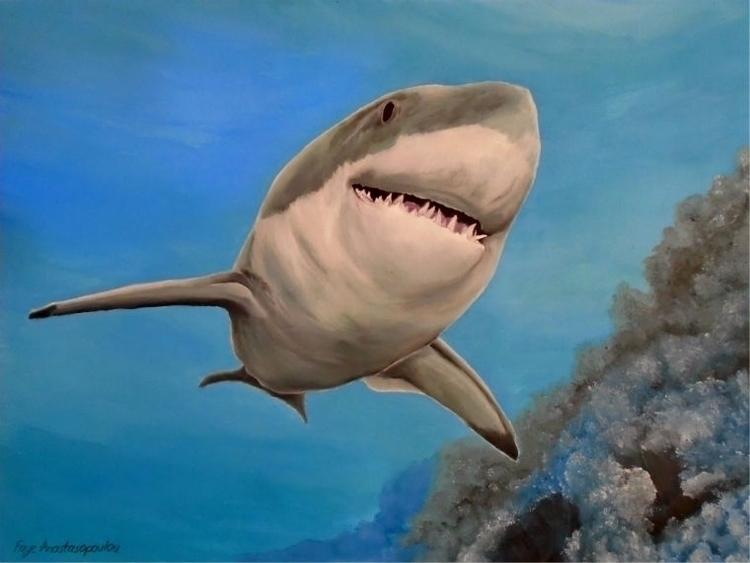 shark, underwater, wildlife, ocean - fayeanastasopoulou | ello