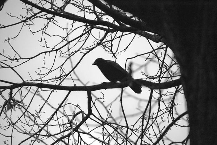 ellophotography, photography - myriam | ello
