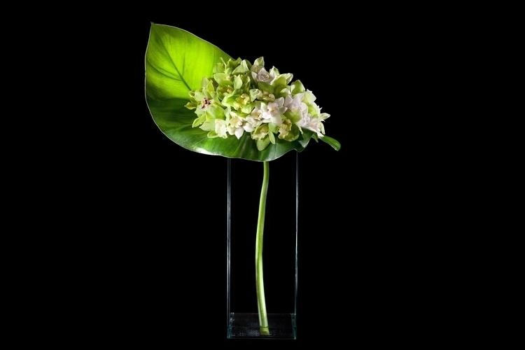 flowers, ello, botanicaldesign - priscilla_murray   ello