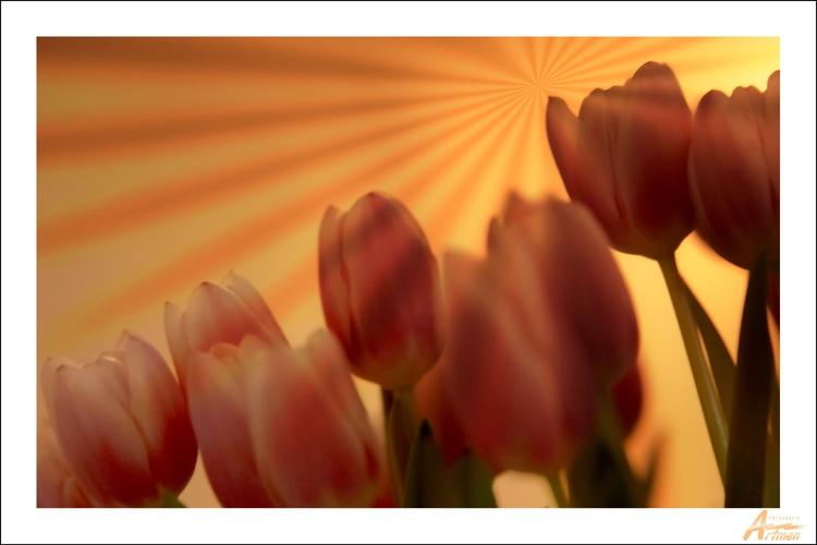 Tulips - artmen | ello