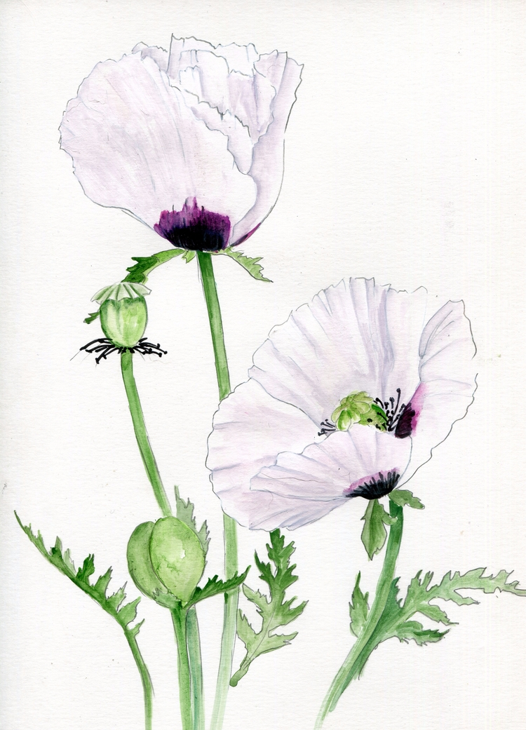 Awe Watercolor, Gouache Chinese - havekat | ello