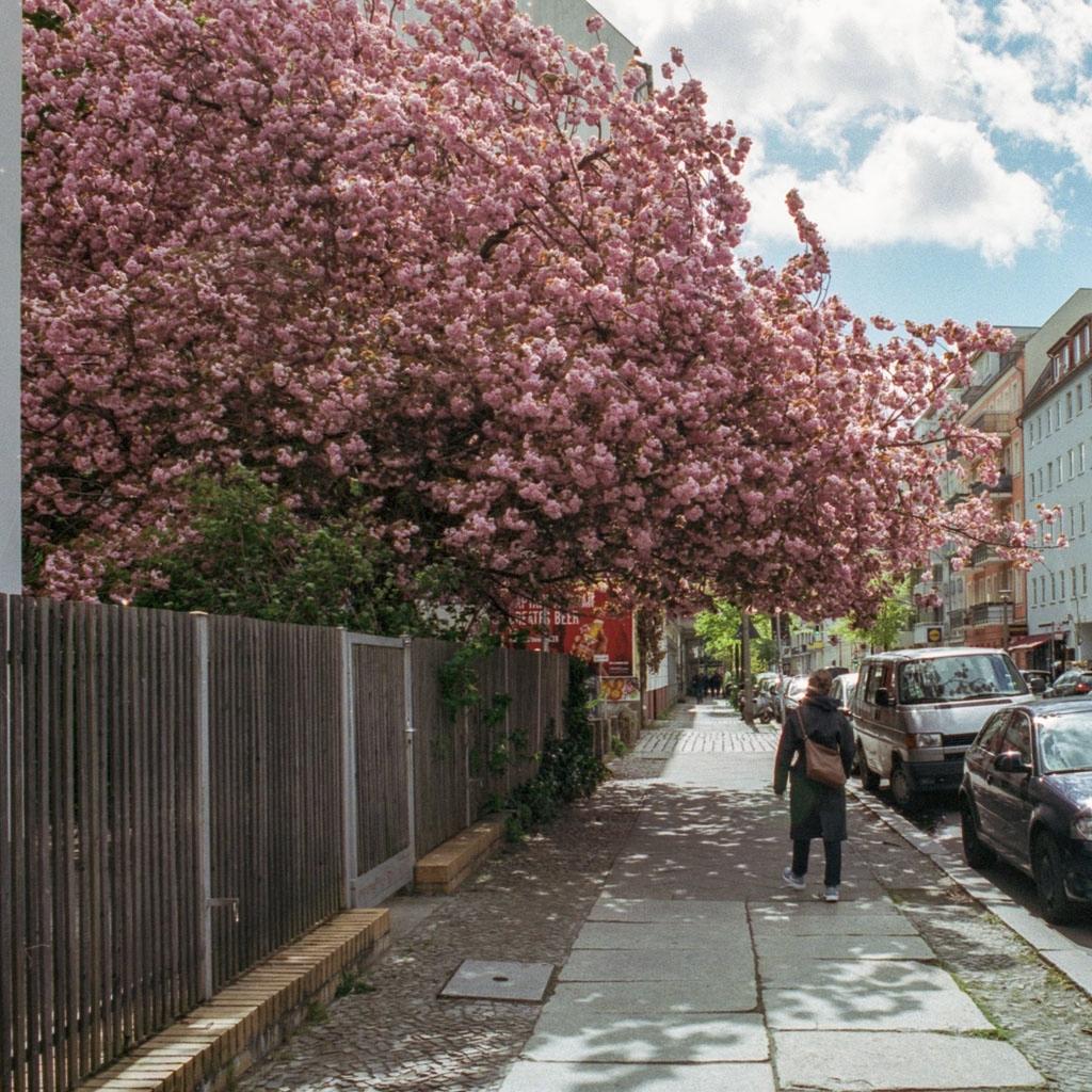 Big cherry wave - street, photography - freikampf | ello