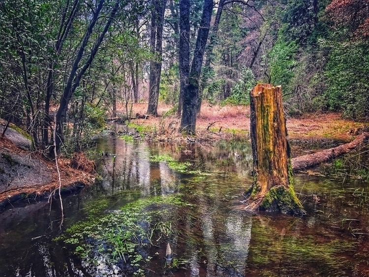 Stump water trees...Yosemite - iphoneography - hollingsworth | ello