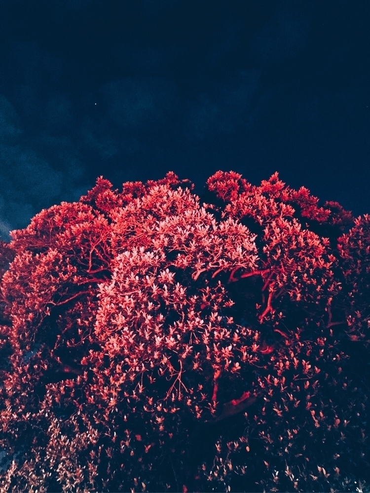 photography, photo, nature, reds - spacesbeats | ello