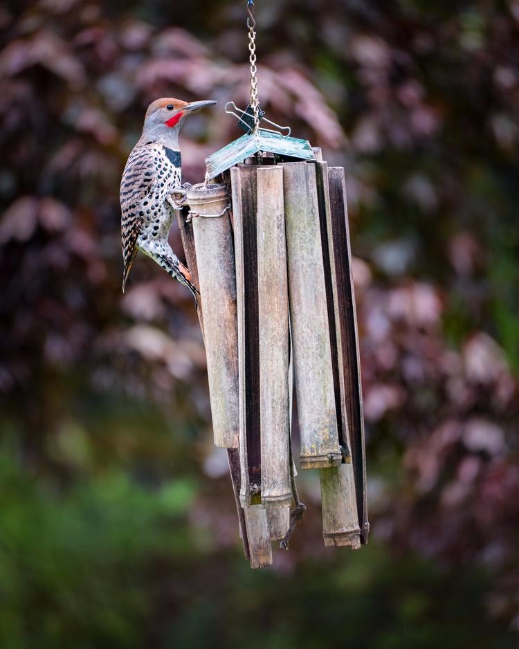 angry birds. happy kindsa borin - wasimofnazareth | ello