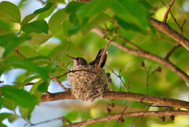 Hummingbird Nest Shaunna Jengo  - shaunnajengo | ello