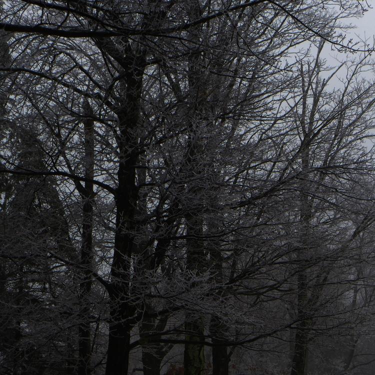 Winter trees - dalespiry | ello