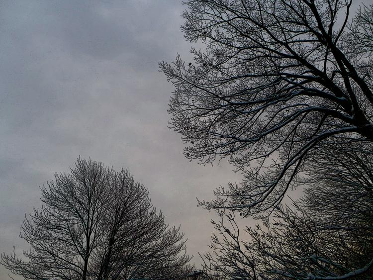 Winter branches solitude - dalespiry | ello