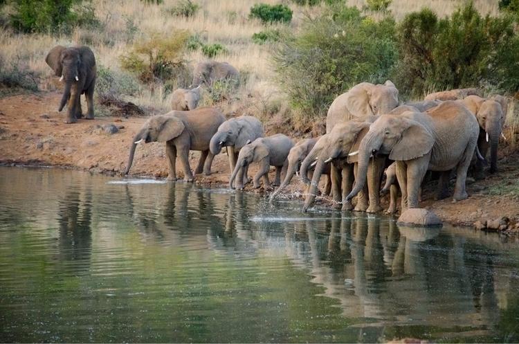 young heard elephants parents d - asweseephotography | ello