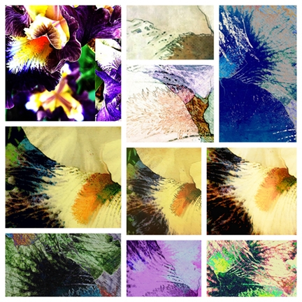 Snippets Iris series digital cr - jmbowers | ello