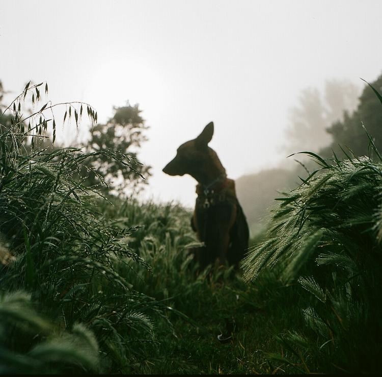 weeds dew - hasselblad, dogphoytography - teetonka | ello