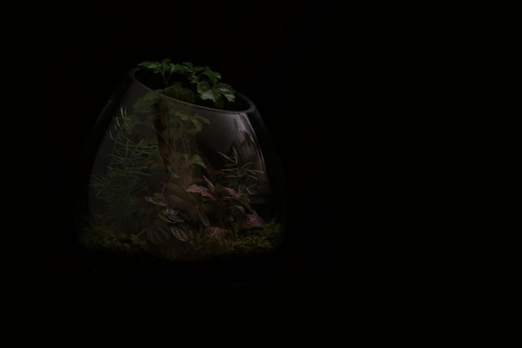 Forêt sous verre - photography - clotildeh | ello