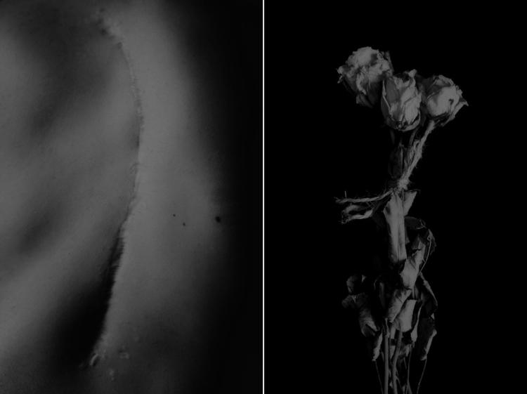 corpus_vertebrae Post 18 May 2017 19:34:07 UTC | ello