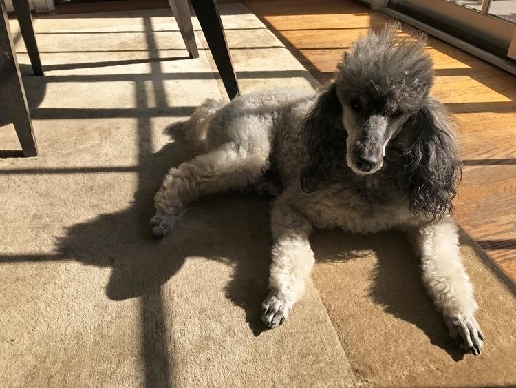 Godfrey Takes Sun, Silver Lake  - odouglas | ello