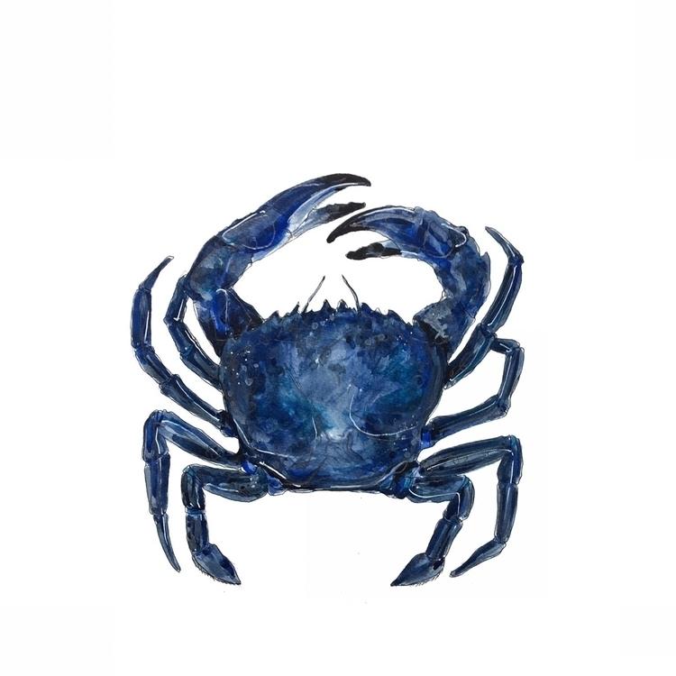 nautical, crab, blue, colour - aliellydesign | ello